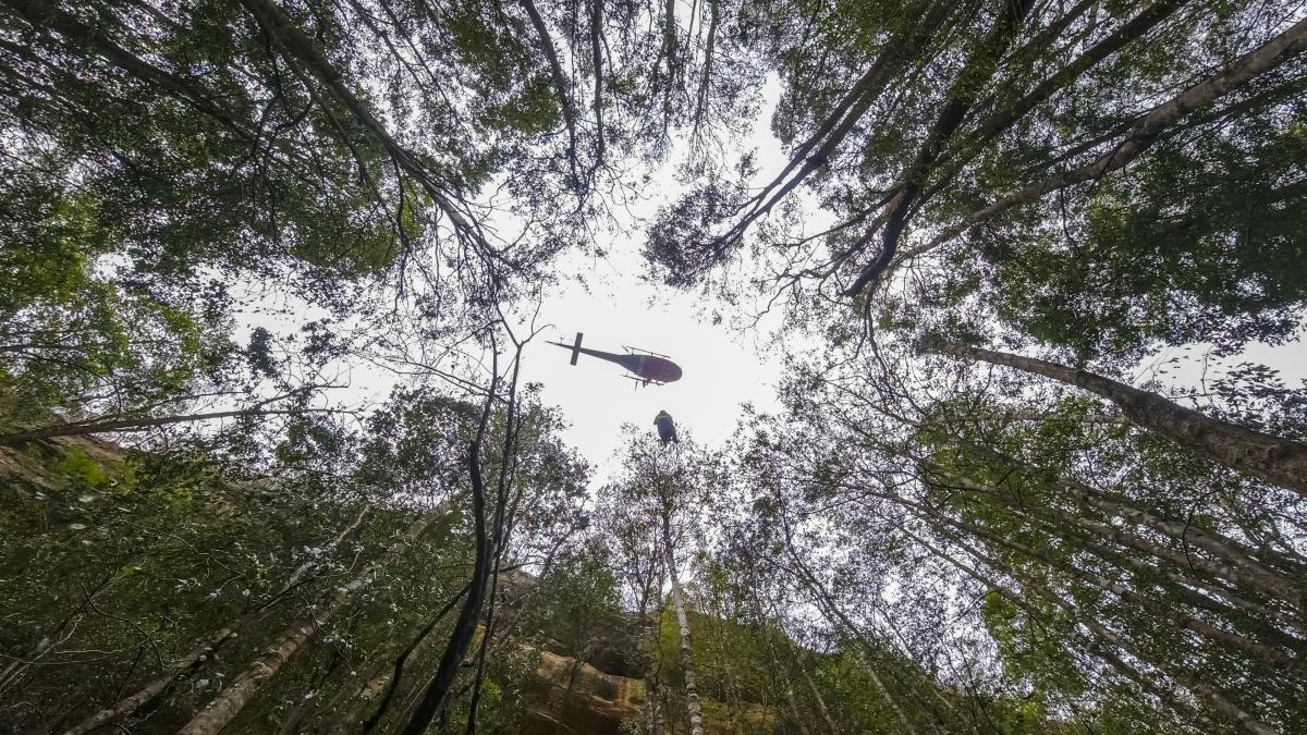 Firefighters winched their way from helicopters to the forest floor. The exact location of the groves is a carefully guarded secret.