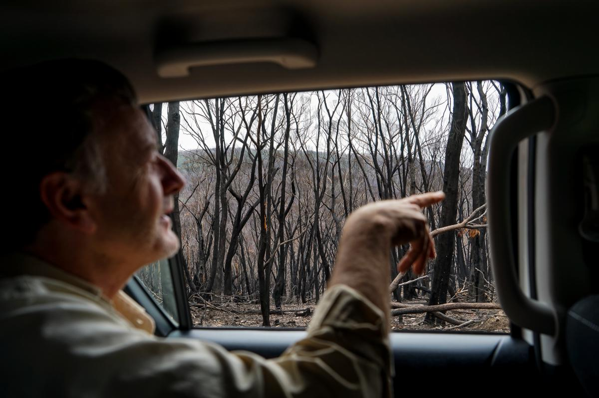 Plant ecologist Michael Doherty looks at a severely burnt part of forest in southeast Australia's Tallaganda National Park. He believes the forest should be able to recover from the devastating fires.