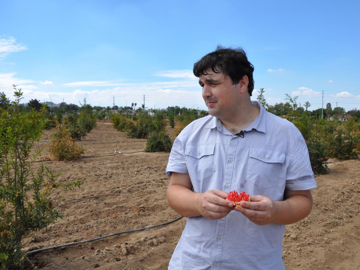 John Chater, a plant biologist studying pomegranate diversity at the University of California, Riverside, first got the notion to study the fruit when he was a child and his grandfather introduced him to different varieties from Lebanon.