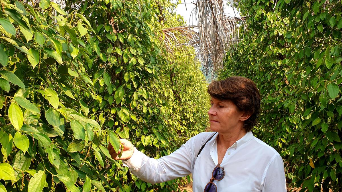 Nathalie Chaboche, co-owner of La Plantation in Kampot, inspects peppercorns on the vines at her pepper farm, one of the biggest in the province.