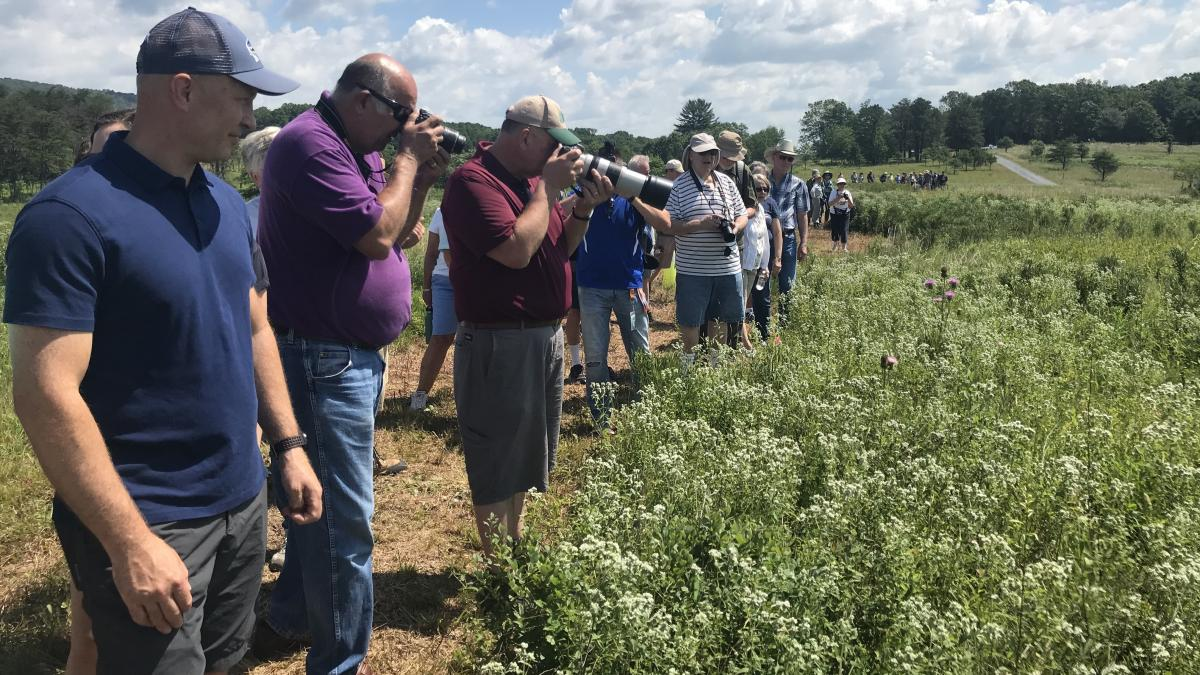 People take photos of the regal fritillary butterfly during a tour at Fort Indiantown Gap, a National Guard training center in central Pennsylvania.