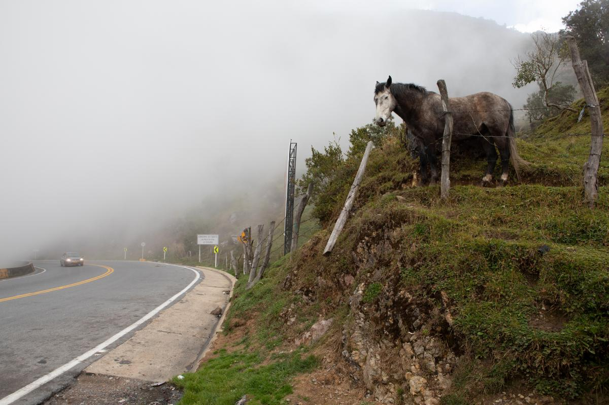 A horse stands at the highest peak before a path known as La Nevera (The Refrigerator). As the road climbs to 10,000 feet above sea level, temperatures can drop below freezing. This fluctuation is a drastic change from the hot weather in the border city o