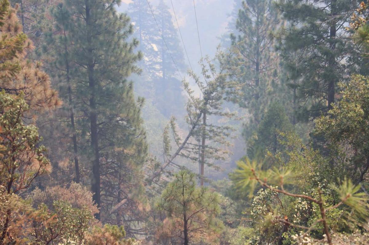 This fir tree lies on a power line in an area near the start of the Dixie Fire in California. PG&E says the costs of maintaining trees near power lines are part of the reason it is moving to bury 10,000 miles of new power lines at a cost of at least $15 b