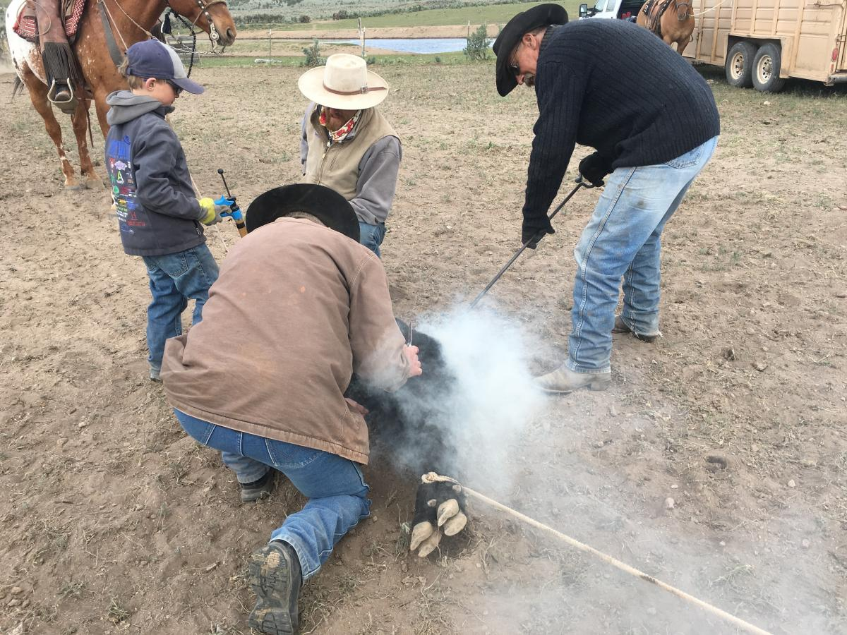 At brandings in southeast Oregon, kids begin to learn ranch work at a young age. Often, they are put in charge of holding horses, vaccinating cattle and keeping branding irons hot in the fire.