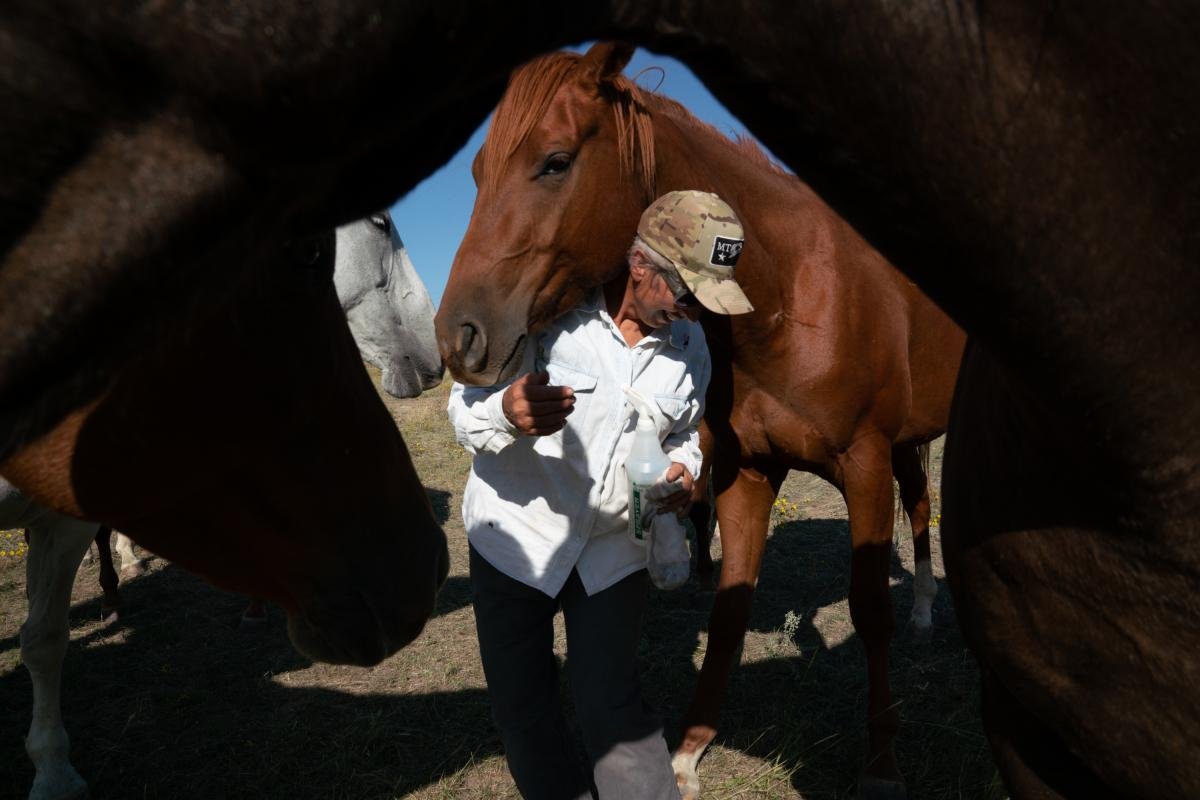 """Conni French is surrounded by horses as she goes about her daily chores on the cattle ranch. """"I see them coming in with big money, buying up ranches and walking over the top of the people who are already here,"""" she says."""
