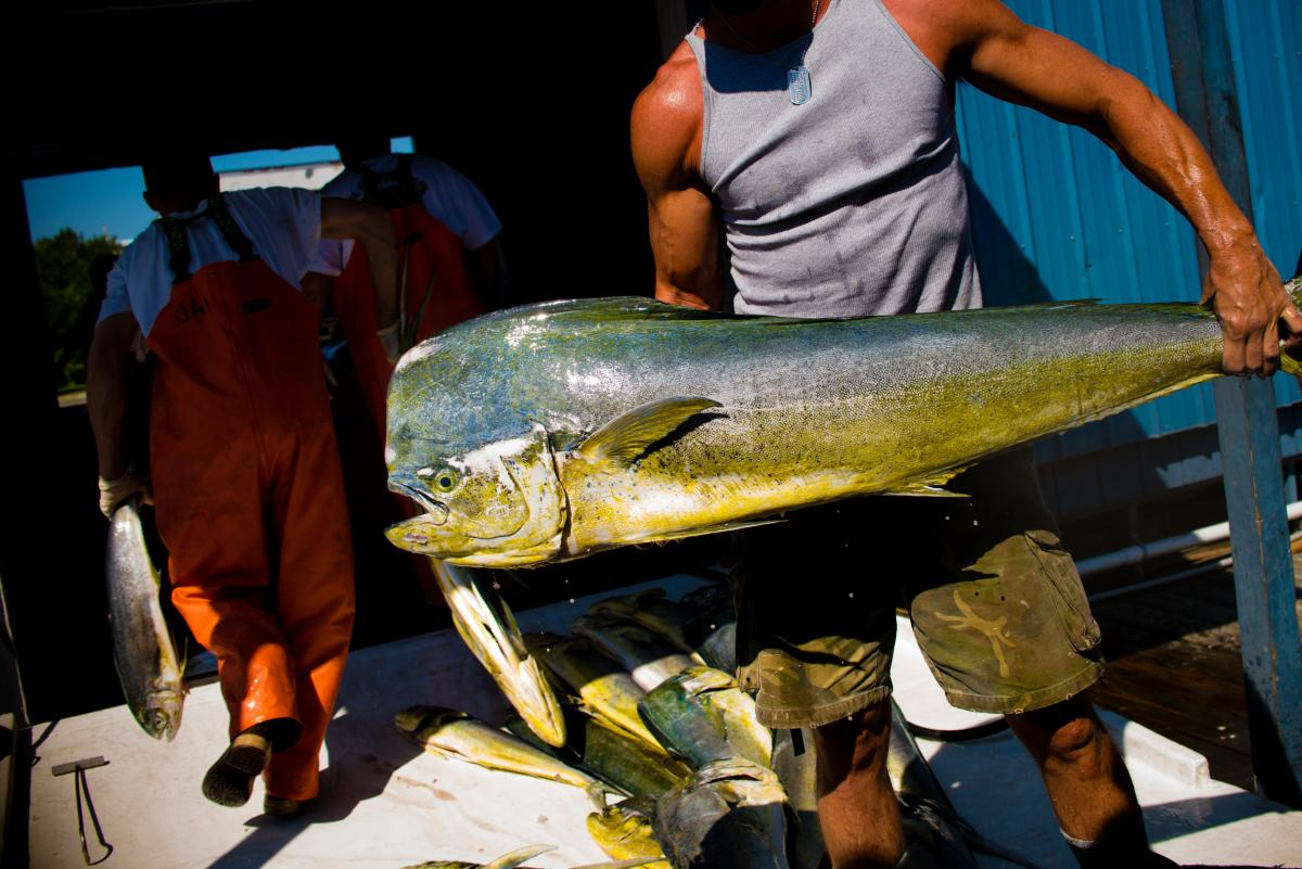 Fisheries that are certified as sustainable says they do not overfish, that they protect other kinds of life in the ocean, and that managers keep track of the latest research and adjust methods to minimize environmental impact.