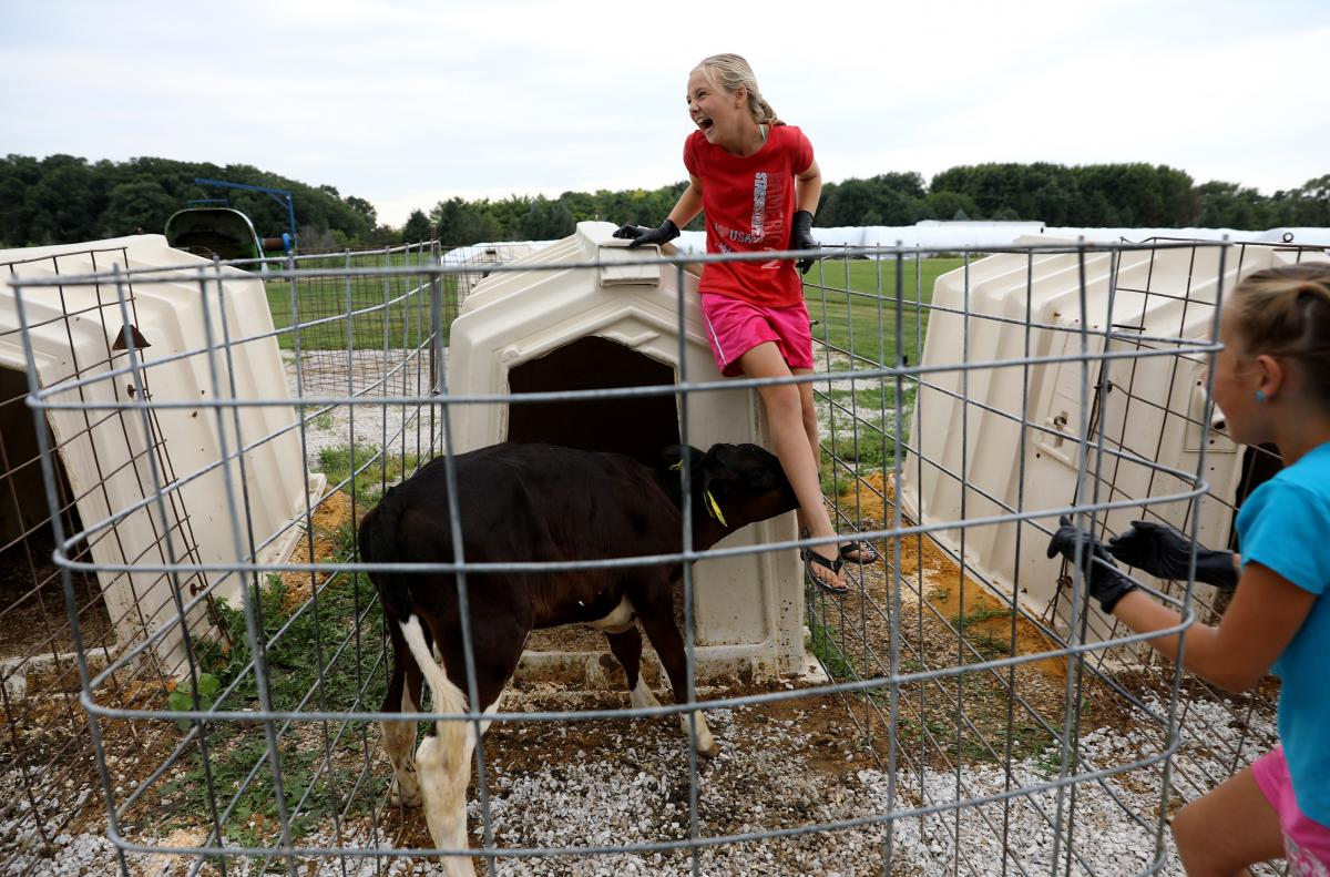 Eve Clark, 10, is nuzzled by a calf during feeding time at Vision Aire Farms. Also pictured is her cousin, Addison Grade, 7. Eve, along with her siblings and cousins, regularly take care of the animals and other chores around the farm.