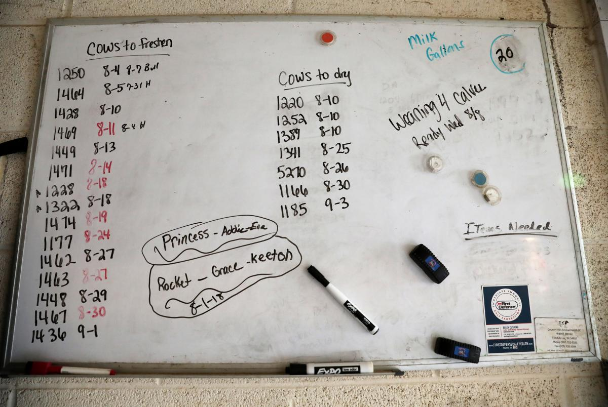 """A board near the barn lists the cow tag numbers along with information concerning the dates they are ready to """"freshen"""" or """"dry."""""""