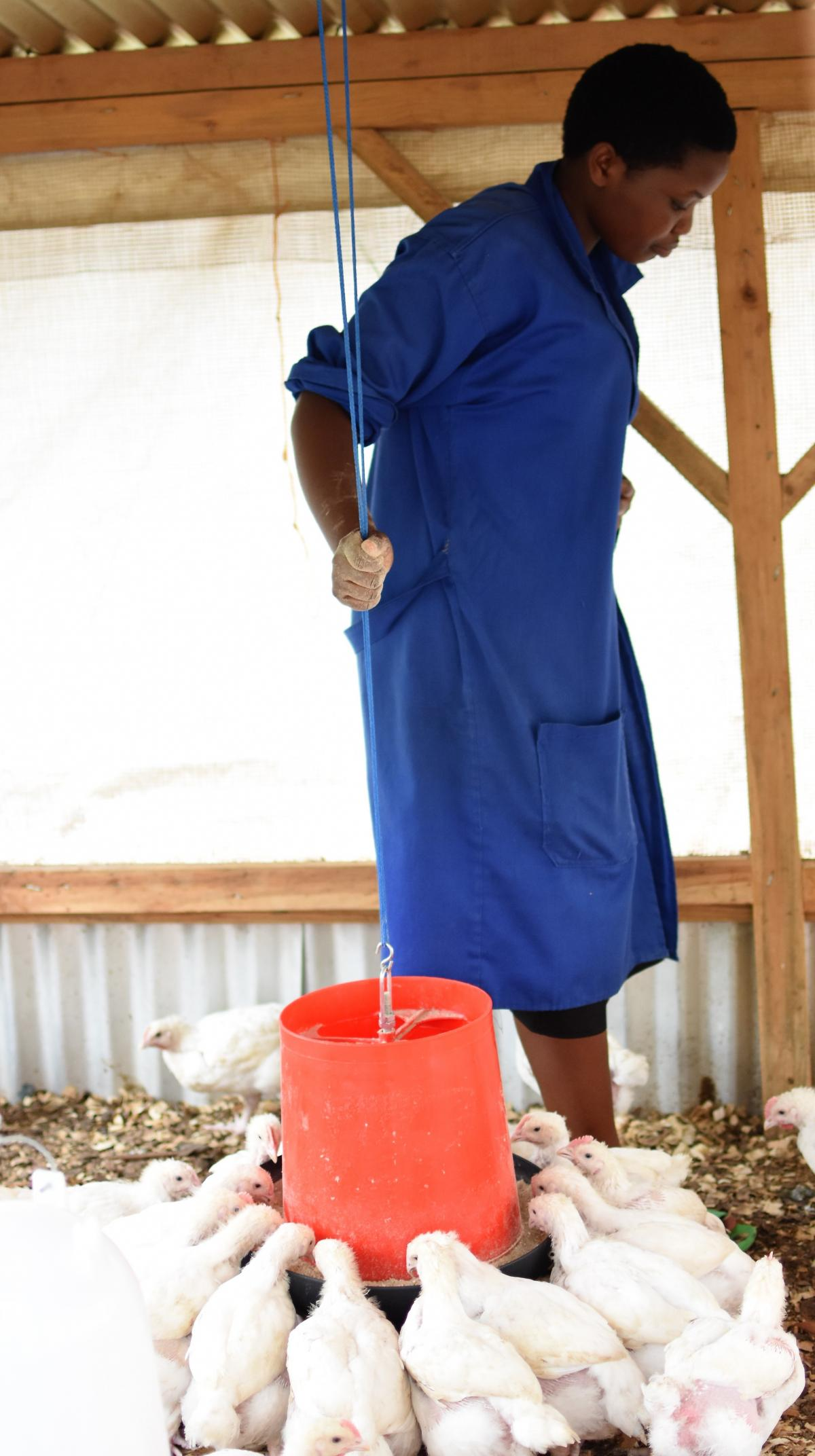 A former Tysons CEO started a program in Rwanda teaching farmers how to raise chickens, but it faces several challenges, including the fact that the country has no infrastructure to support it.