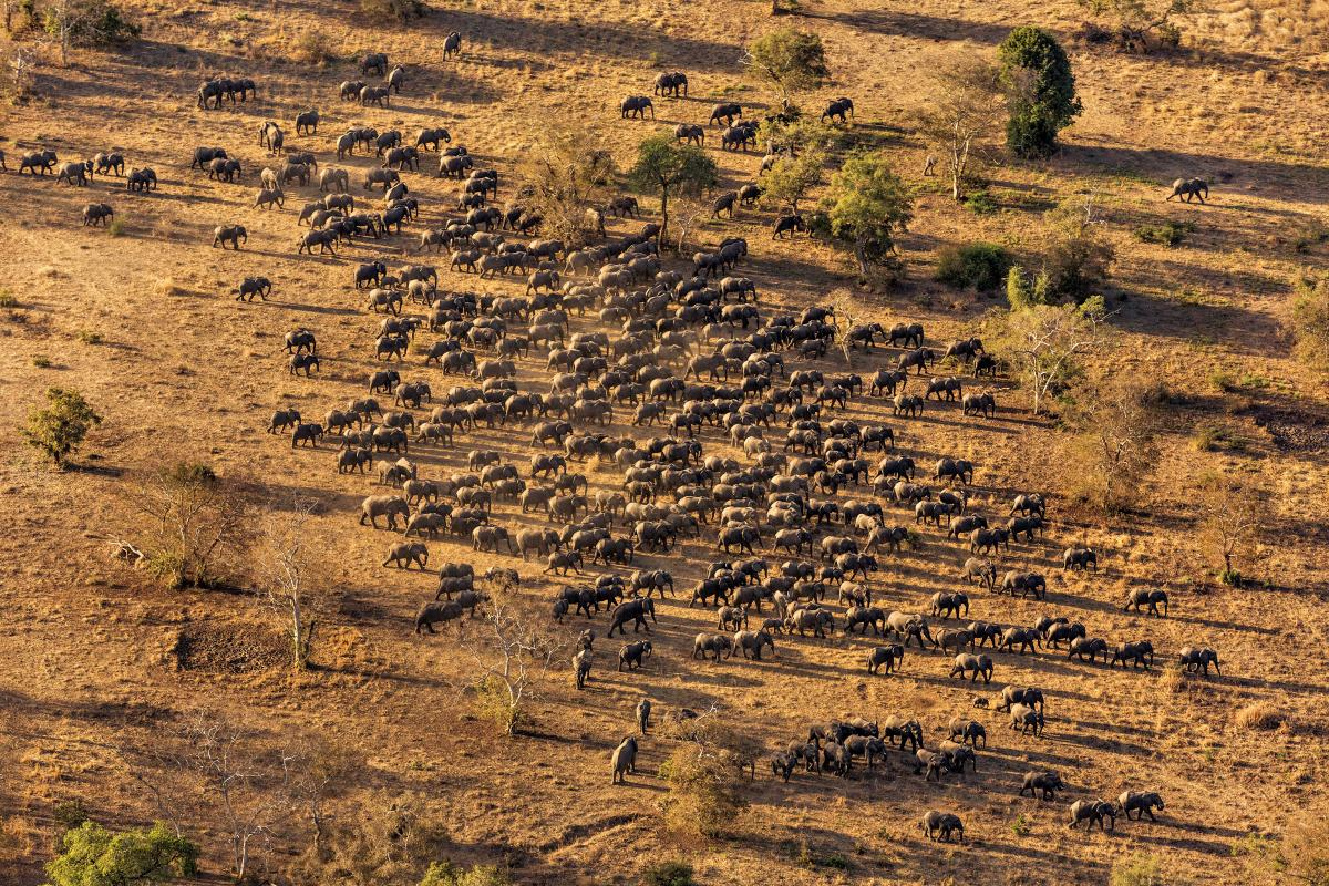 Poaching has been curbed in Chad's Zakouma National Park, but rebuilding the park's herd, now at 450, will take years.