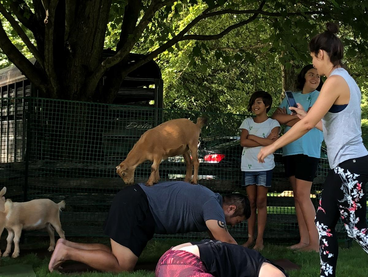 A new yoga pose: Upward goat. Don Kim is the man with the goat on his back.