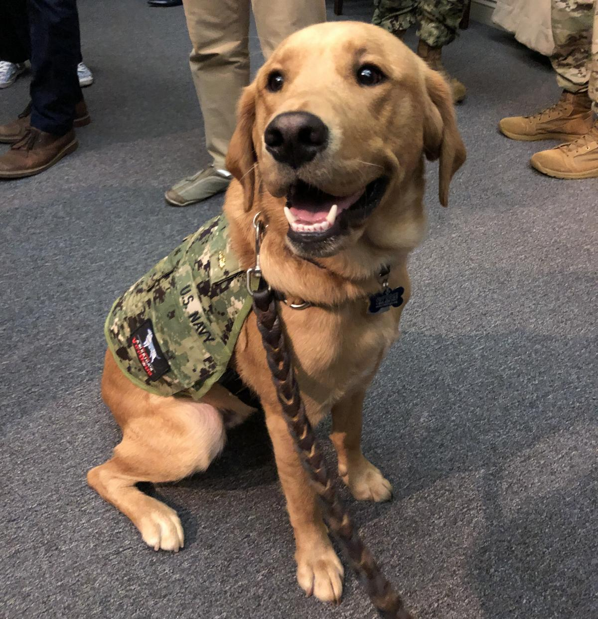 """Service dogs can be trained to provide very different types of support to their human companions, as medical students learn from interacting with """"Shetland,"""" a highly skilled retriever-mix."""