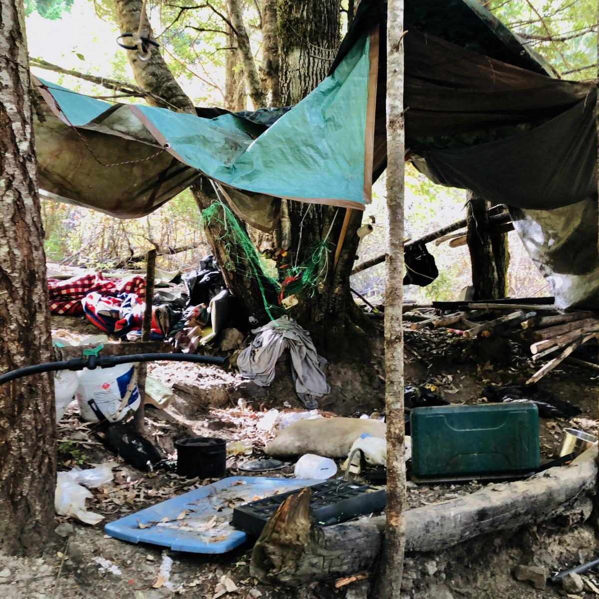 A sprawling grow and camp site was abandoned in California's Shasta-Trinity National Forest. There's some 3,000 pounds of trash here from discarded clothes and propane tanks to 3 miles of plastic irrigation pipes — an indication this site has likely bee