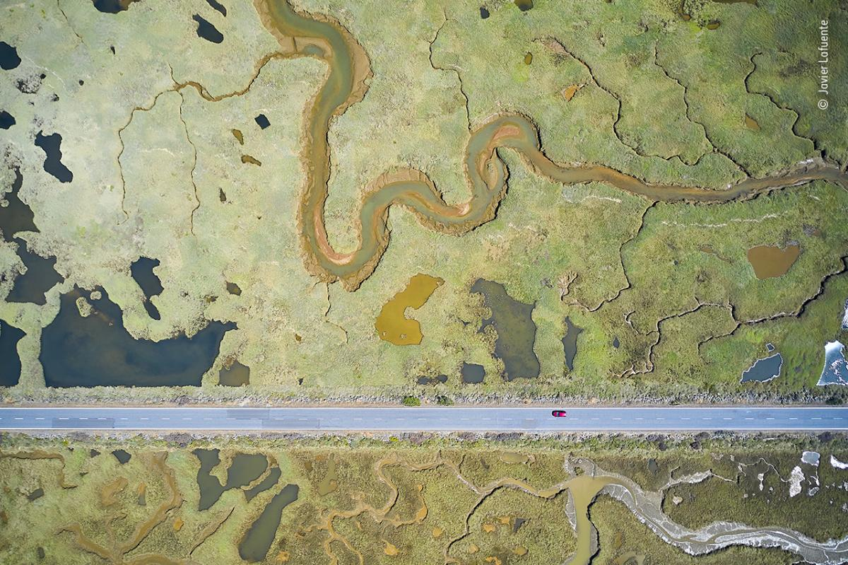 Road to ruin by Javier Lafuente, Spain, Winner, Wetlands - The Bigger Picture. Javier Lafuente shows the stark, straight line of a road slicing through the curves of the wetland landscape. By maneuvering his drone and inclining the camera, Lafuente dealt