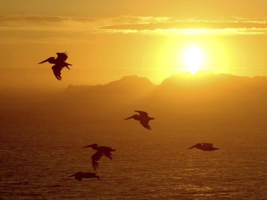 Birds silhouetted against the sun