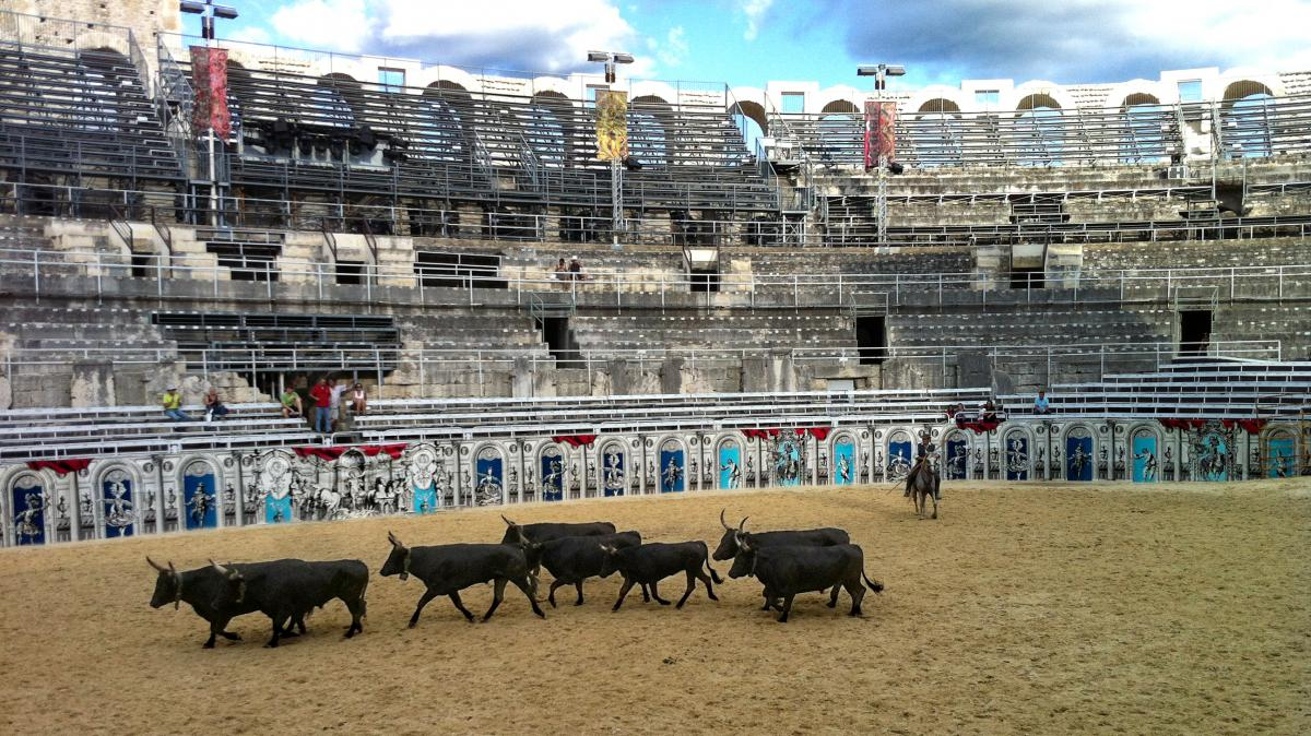 The black, long-horned Camargue bull is just one of two breeds of fighting bulls in Europe. The bulls are shown here at the Roman arena in Arles, southern France.