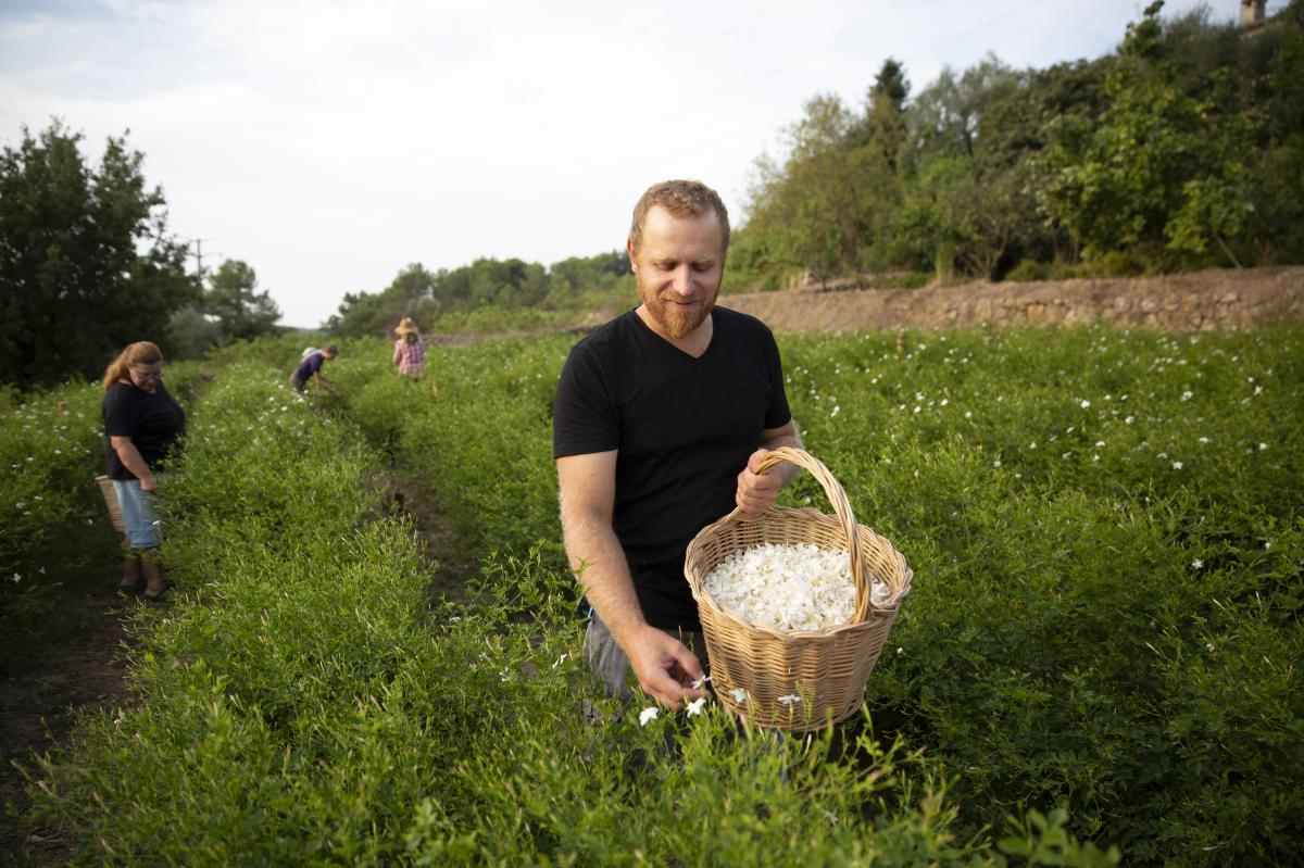 """Pierre Chiarla, picking jasmine, says his grandmother and her sisters picked jasmine flowers in this same terraced field 70 years ago. But climate change is a concern. """"We are worried because we are seeing, for example, freezing temperatures and hail in t"""