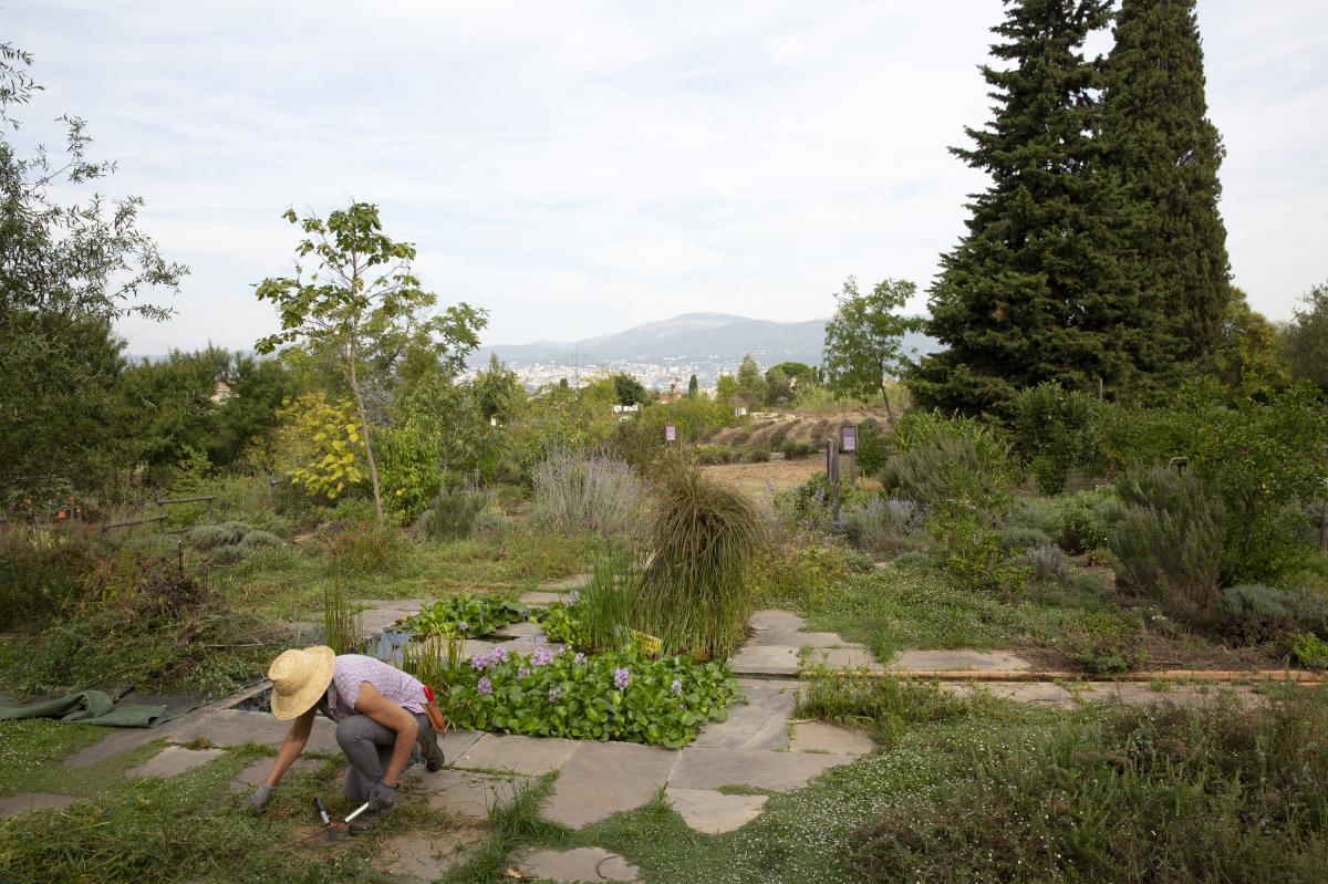 """General view of the International Perfume Museum's gardens in Grasse. """"The same rose or the same jasmine grown in Egypt or Morocco, it will be different from the rose grown in Grasse,"""" head gardener Christophe Meze says. """"It's like wine, you can have the"""