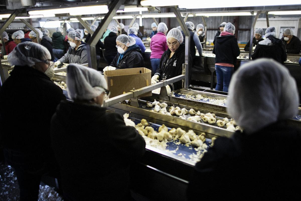 Workers pull out cosmetically defective garlic (that will be processed separately) at the Christopher Ranch processing plant in Gilroy, Calif. About 6 percent of its garlic is bought from China; the rest is homegrown.
