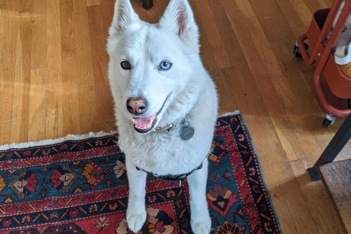 Ghost likes her pineapple toy and sniffing open-window smells. She does not stand for nonsense. Ghost's diligent dog sitter is Dalia Mortada, a Morning Edition alum and editorial lead for NPR One.
