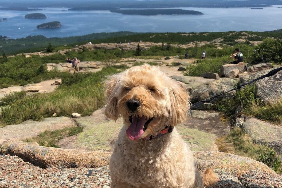 Teddy is happiest by (or preferably in!) the water. Teddy's human is Rachel Treisman, who works on the Morning Edition live blog.