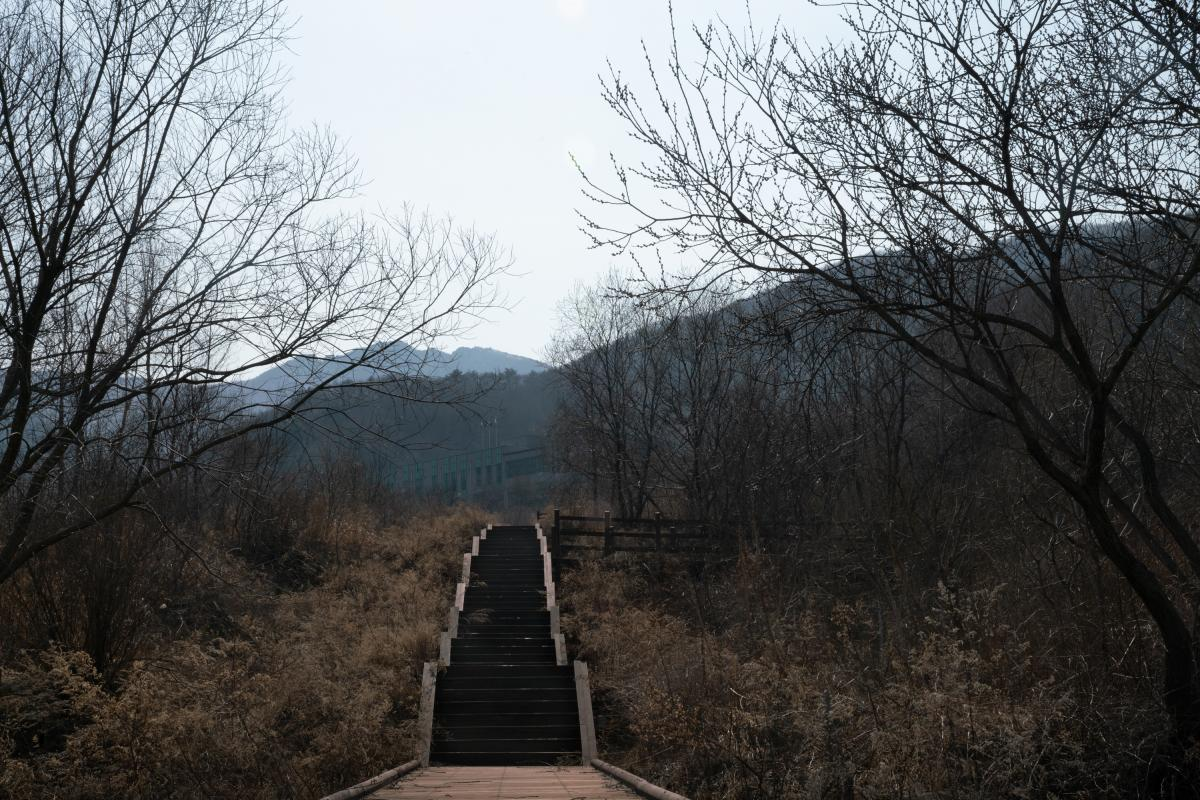 Stairs leading through the DMZ botanical garden, a branch of the Korea National Arboretum affiliated with Korea Forest Service.