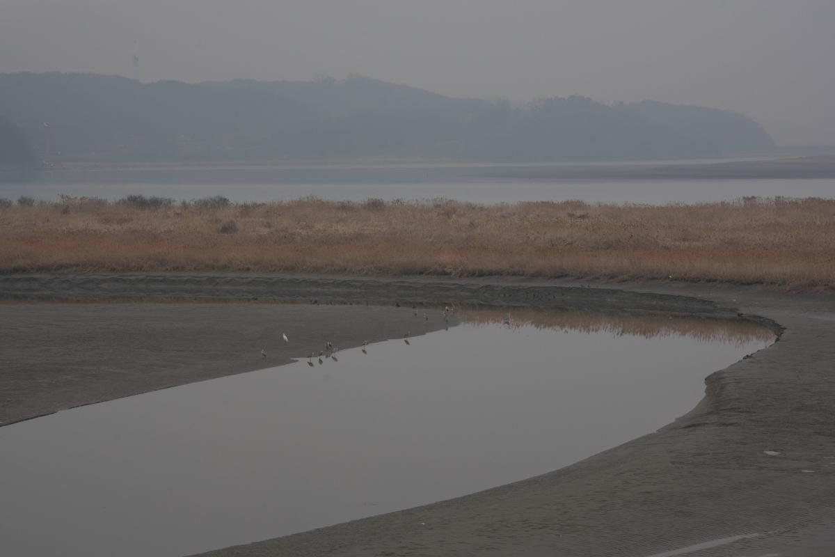 Birds wade on the banks of the Imjin. Kim Seung-ho tallied 32 species of birds in the CCZ in a single morning.