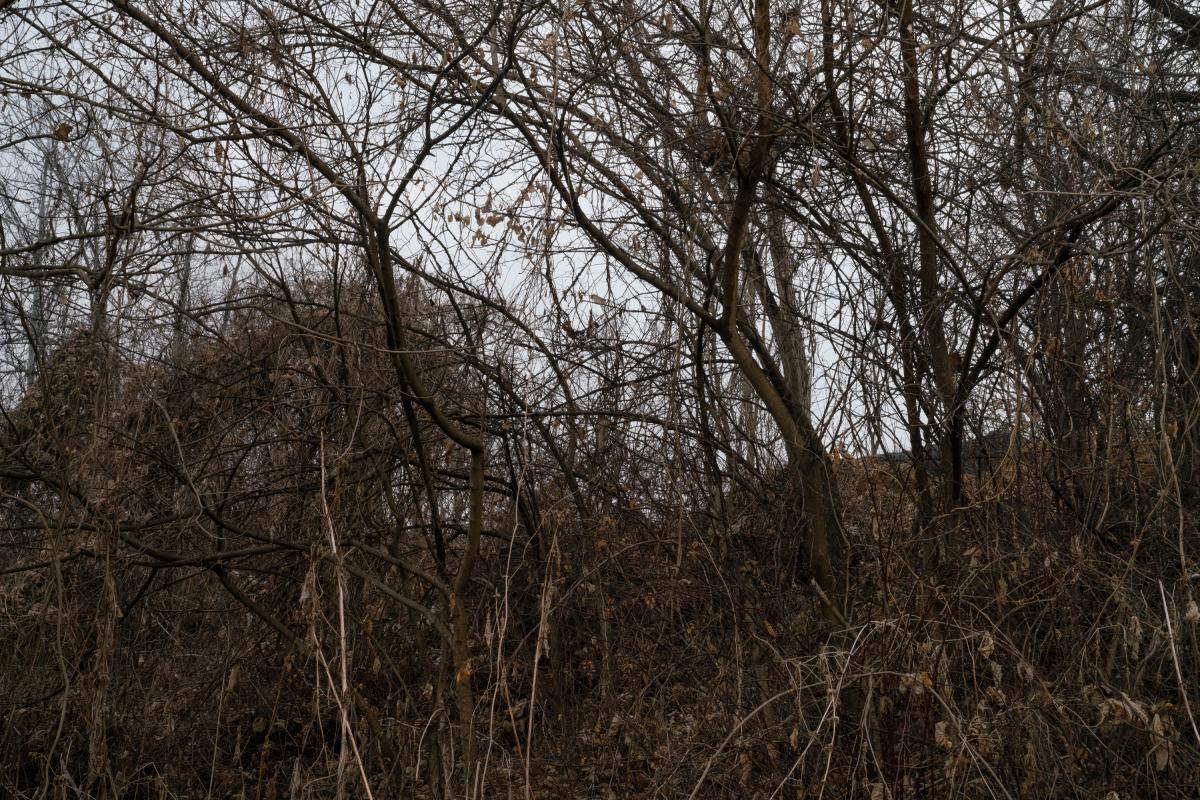 A tangle of trees grows wild in the Civilian Control Zone.