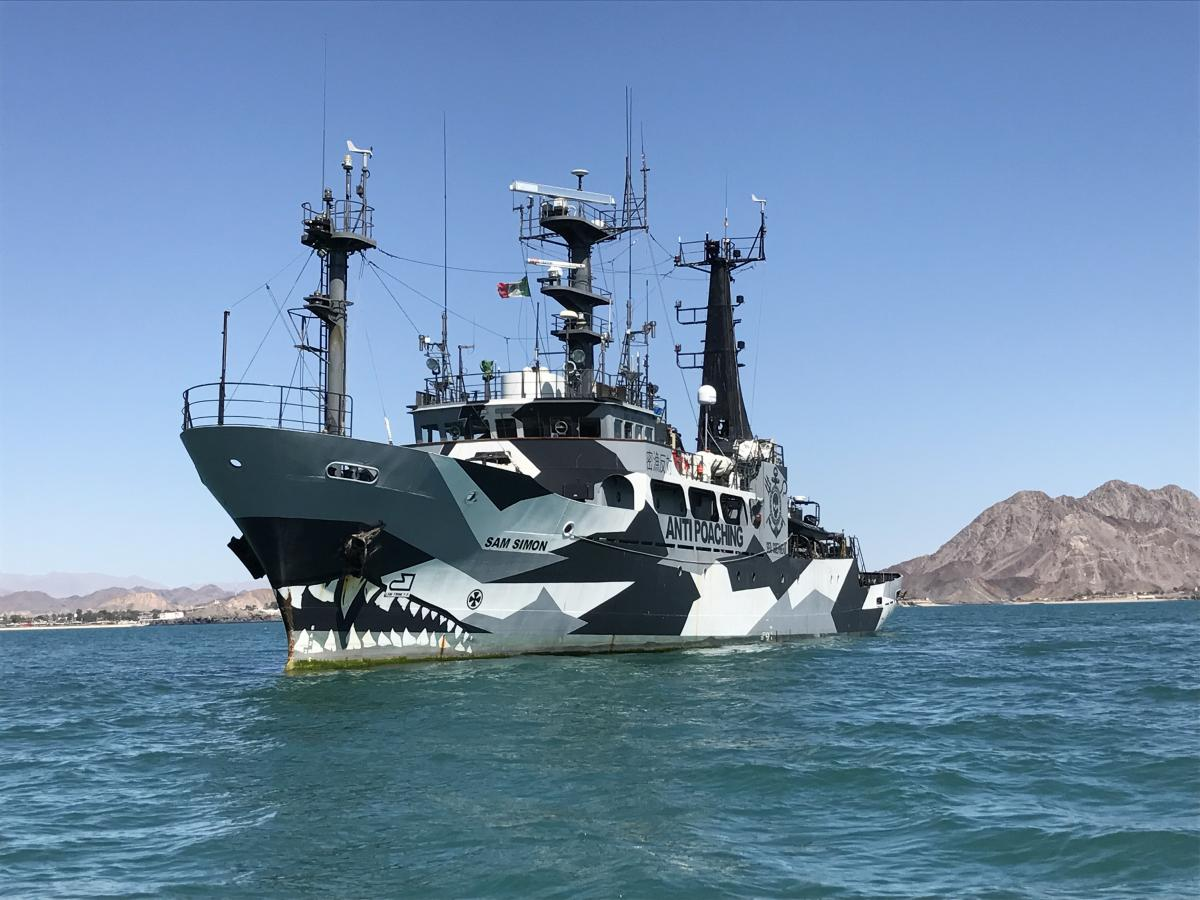 The M/V Sam Simon is one of two boats owned by the Sea Shepherd Conservation Society that is scouring the Gulf of California in search of illegal fishing.