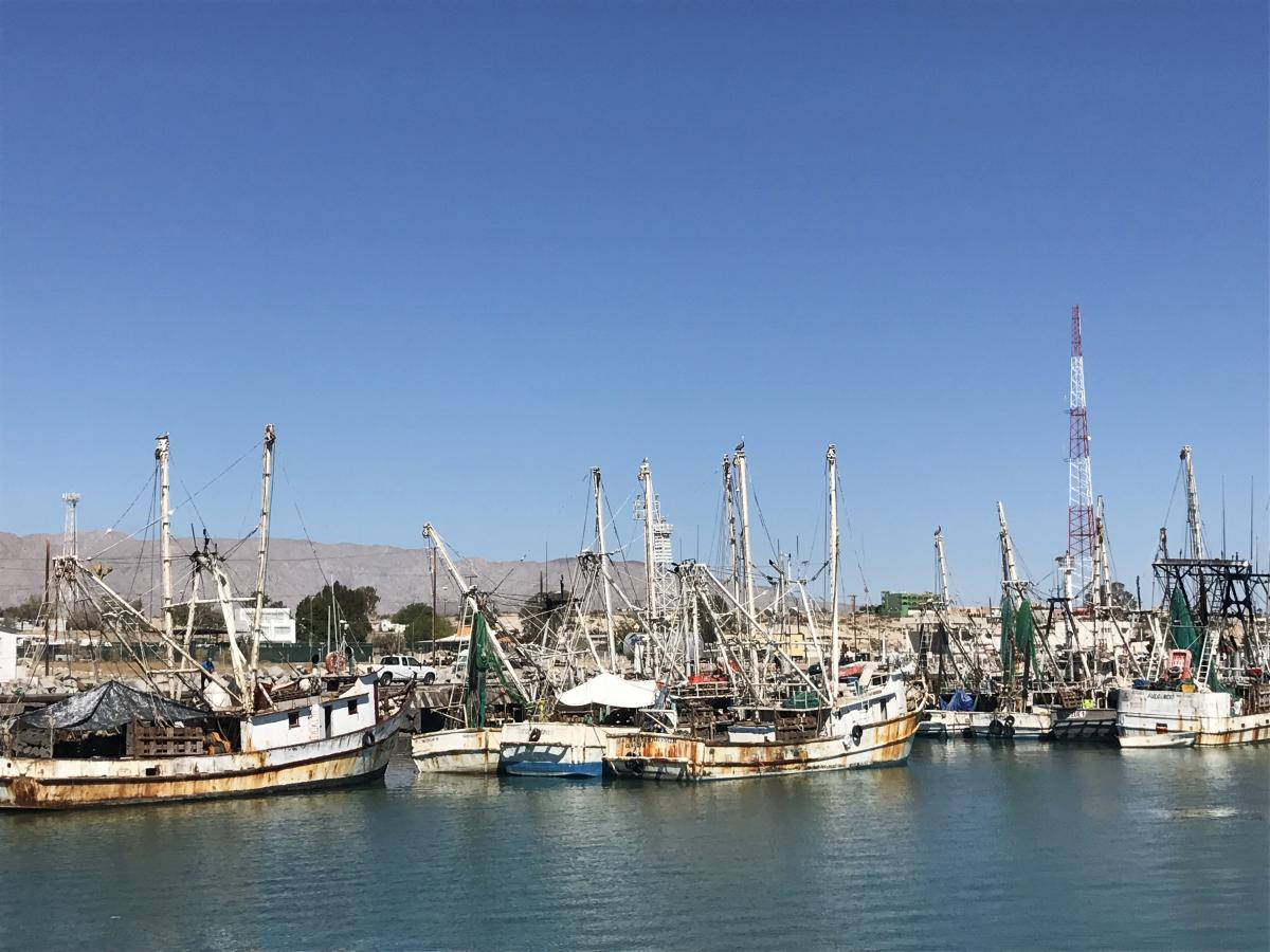 The San Felipe fishing fleet is mostly made up of shrimp trawlers and small boats known as pangas that head out in the Gulf of California.