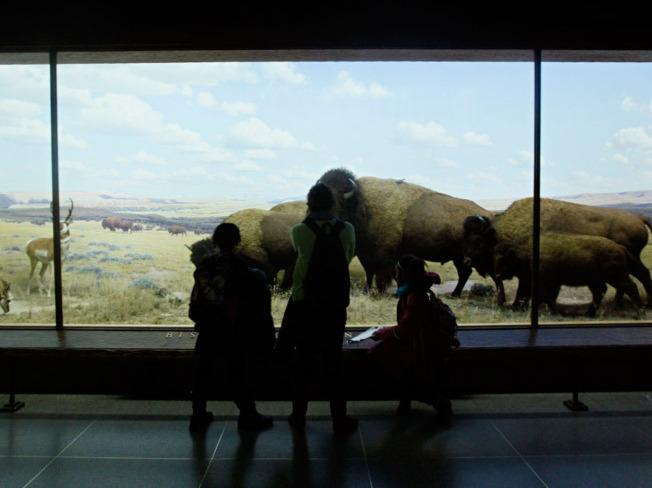 Visitors to the American Museum of Natural History look at a diorama for which Scherer painted the background decades prior.