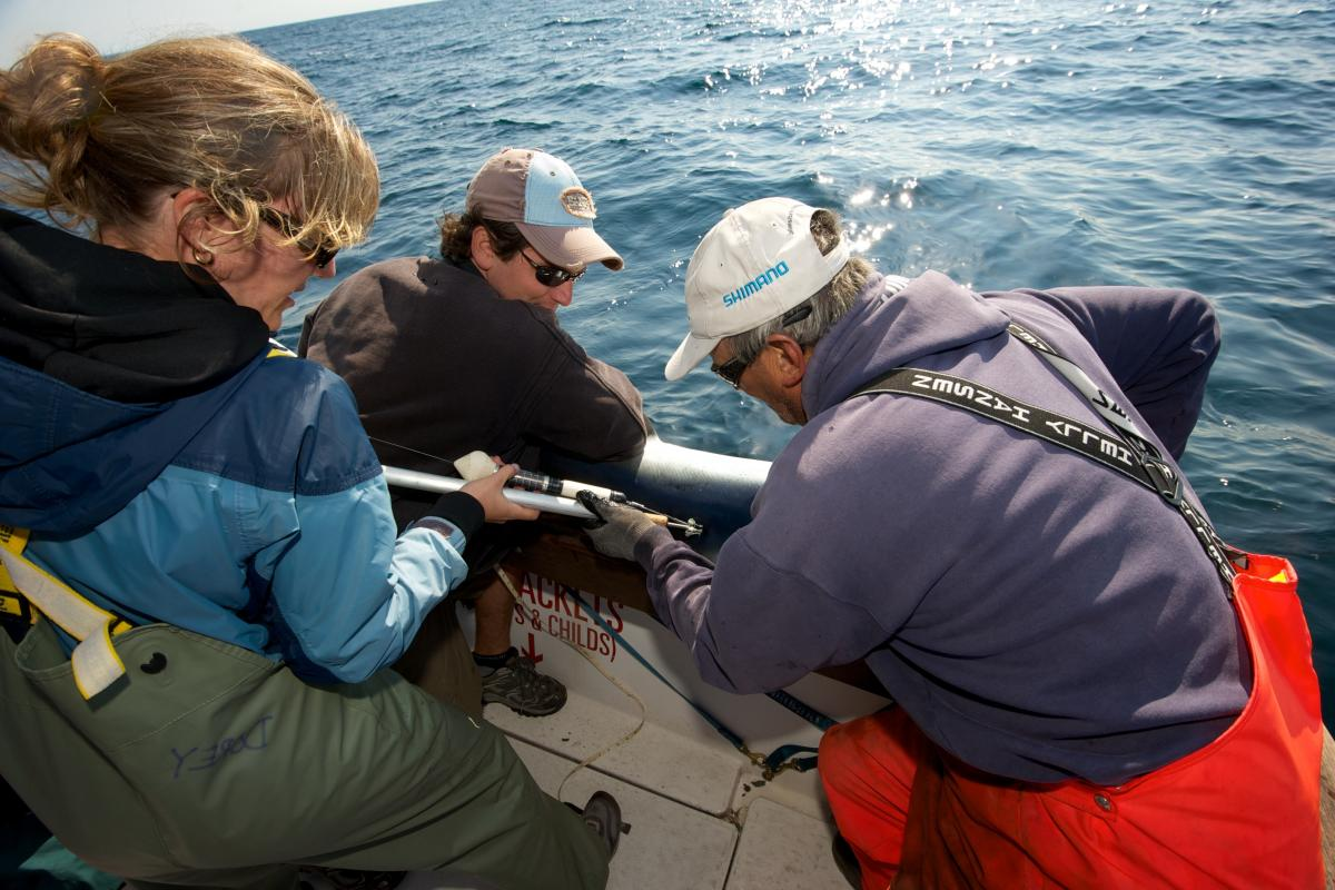 Shark charter operator Art Gaeten (right) and recreational shark fisherman Shawn Knowles struggle to hold a blue shark in position while shark biologist Anna Dorey attaches a satellite tag to its back. Researchers say about five blue sharks are caught for