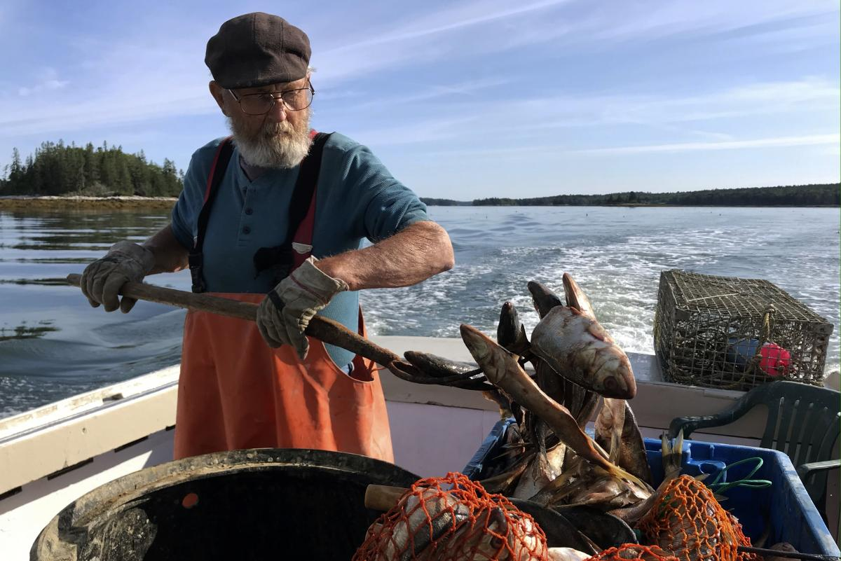 """Maine lobsterman Verge Prior, 77, works the stern spearing poagies (bait fish) on Aquarius, the lobster boat he built 50 years ago, while his grandson Nick is at the helm. The lobster fleet is """"graying,"""" with fewer young people entering the industry."""