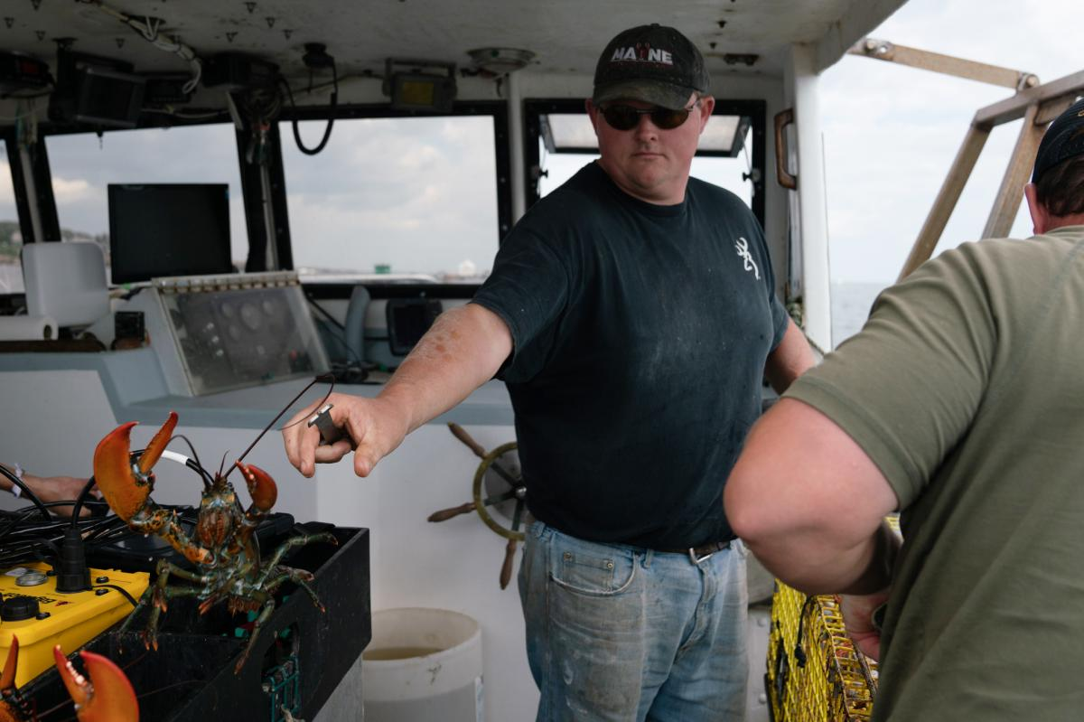 Chris Welch tosses a lobster after pulling it from a ropeless lobster trap. He's skeptical that the new ropeless technology will be practical for most lobstermen.