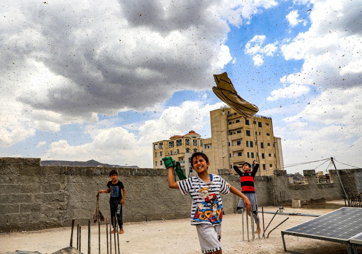 Children try to catch locusts swarming over Sanaa, Yemen's capital, on July 28.