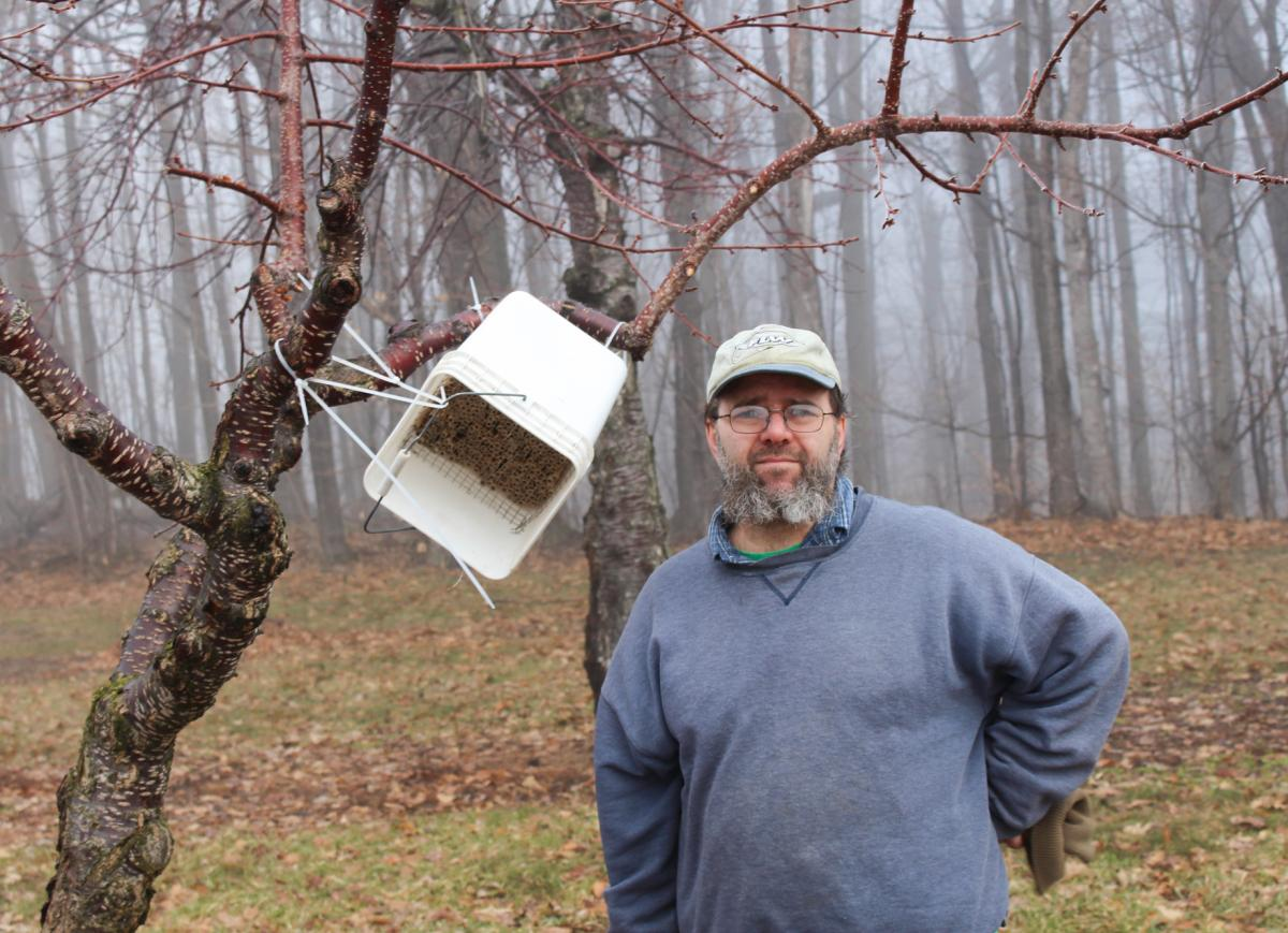 The honey bees that usually pollinate tart cherry trees are vulnerable to erratic spring weather. So, Todd Springer has made hives out of buckets for the more resilient horn-faced bees, which will pollinate his trees even in inclement weather. Springer ca
