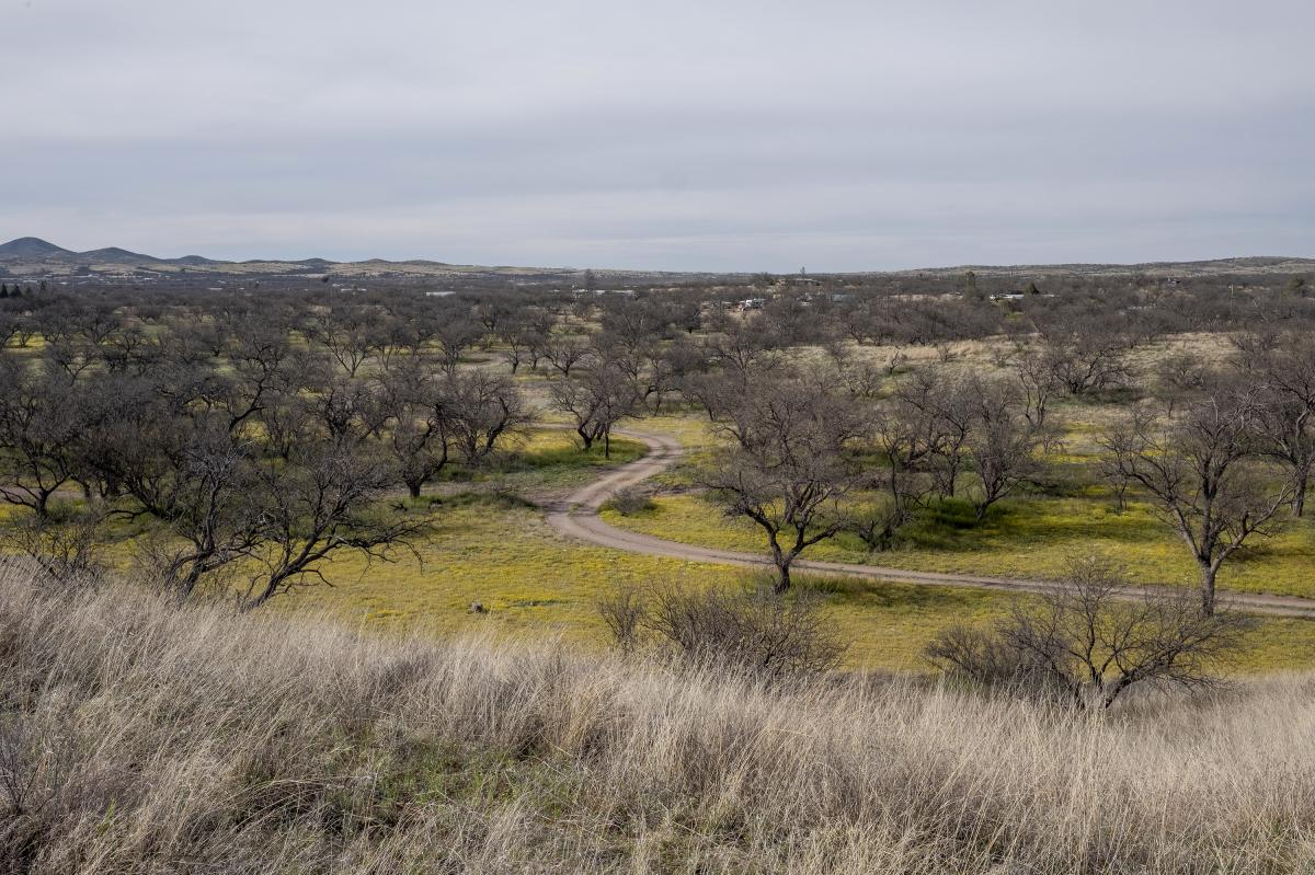 Arivaca sits amid a landscape of rolling grasslands dotted with mesquite trees and cactus.