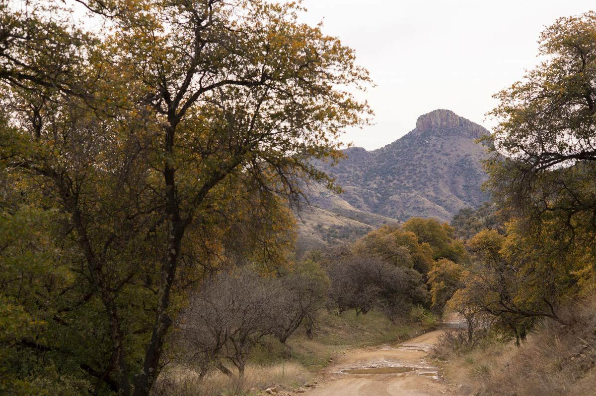 The Coronado National Forest near the U.S.-Mexico border. The Chiltons say if militias want to come and try to secure the border, they're all for it.