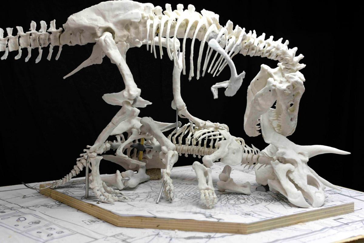 A model of how the T. rex and triceratops will eventually look at the Smithsonian. Every angle and behavior have been vetted by dinosaur specialists, who still debate whether T. rex was primarily a hunter or a scavenger.