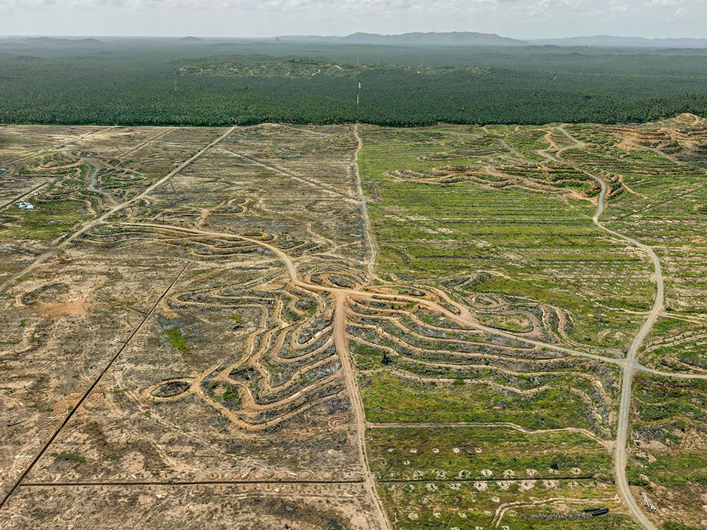 An aerial view of a palm plantation on the island of Borneo. Enormous tracts of tropical rainforest have been cleared to grow the lucrative crop, which is used to create palm oil, a vegetable oil that is also used in food processing.