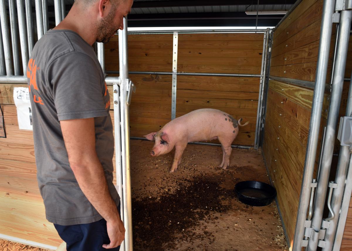 A pig was rescued swimming in floodwaters.