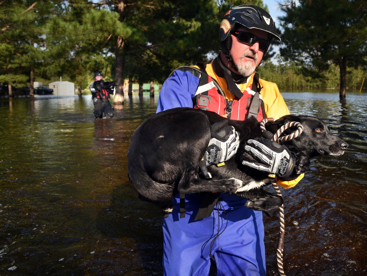 Held carries a nervous dog rescued from floodwaters in North Carolina's Lumberton area.
