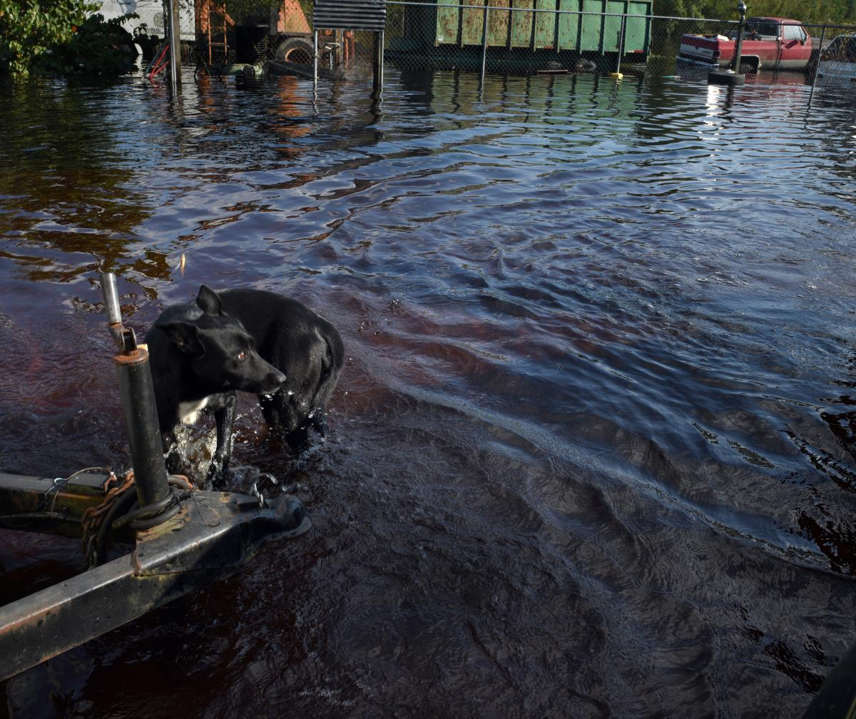 A dog awaits rescue from Florence's floodwaters. The flooding hit Maxton, N.C., rapidly, the Asheville Citizen-Times reported, when temporary levees failed.