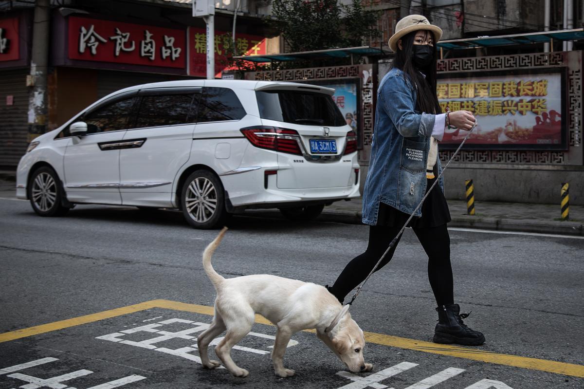 A resident walks a dog.