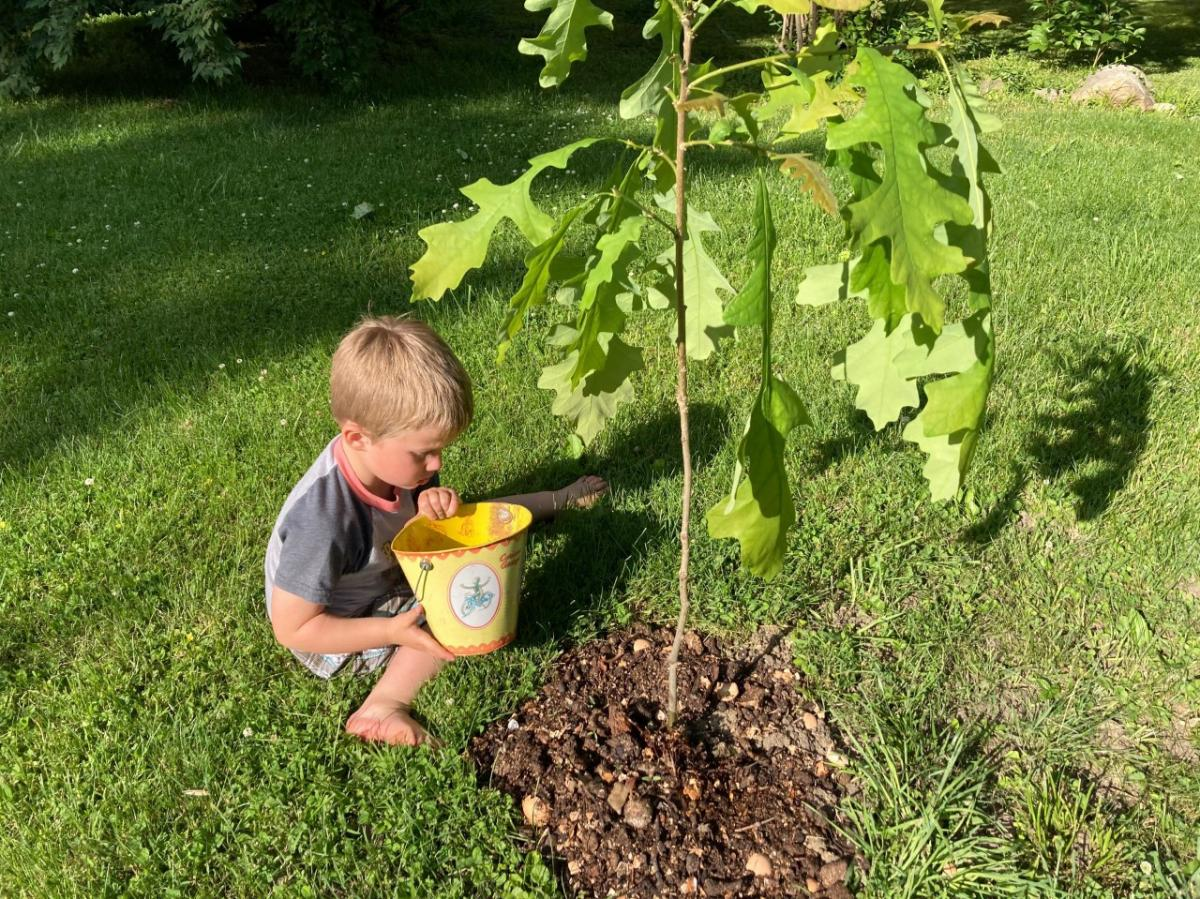 A toddler and a baby tree.