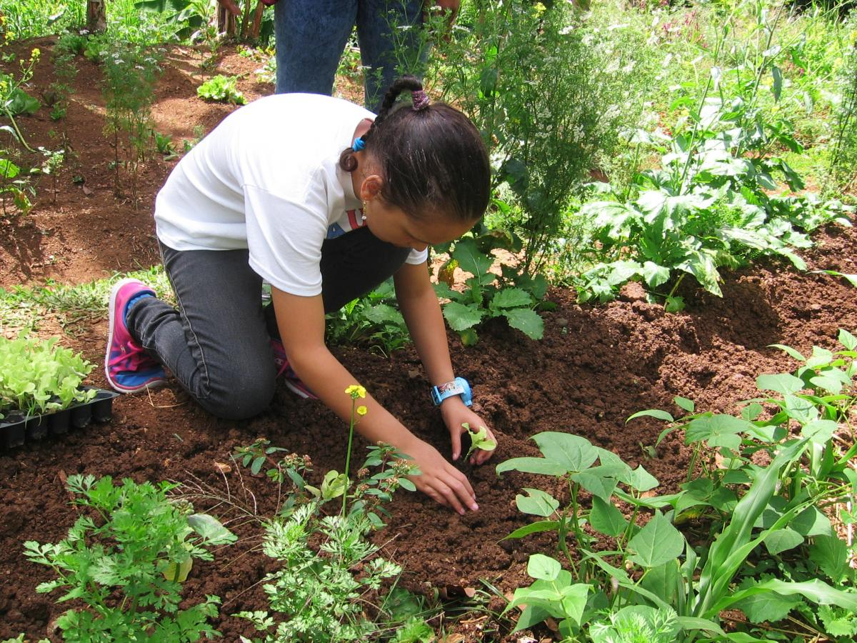 Cartagena's students plant lettuce, radishes, beans and other crops that grow quickly and can be harvested during the school year.