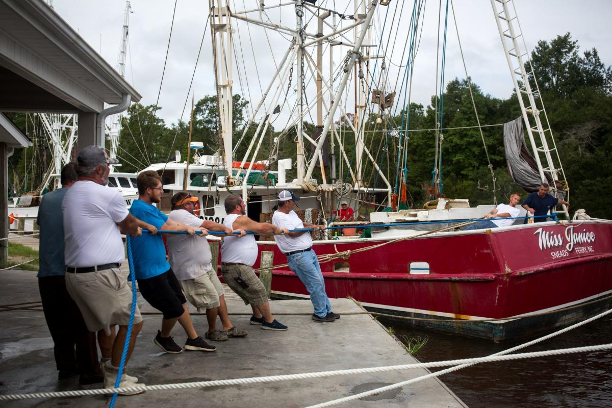Crew members and boat owners help to moor the Miss Janice, a shrimp boat, to the dock at Mitchell Seafood on Wheeler Creek in Sneads Ferry, N.C. on Thursday.