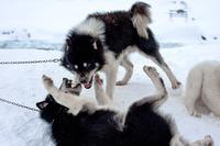 Hus til slædehunde i sneen i byen Tiniteqilaaq på østkysten.