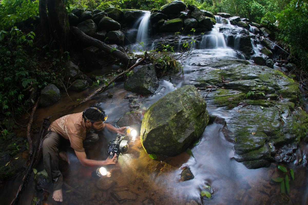 Prasenjeet Yadav photographs frogs that can only be found in streams in the Western Ghats, a mountain range in southwestern India.