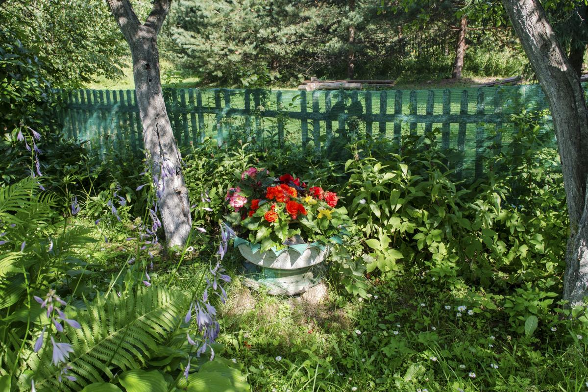 A garden at the dacha of Tatyana and Alexander's neighbors. Gardening is a favorite pastime at the dacha. There's always something to do, and it's that existential, physical activity that stressed-out city dwellers crave.